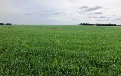 Estancia Agricola